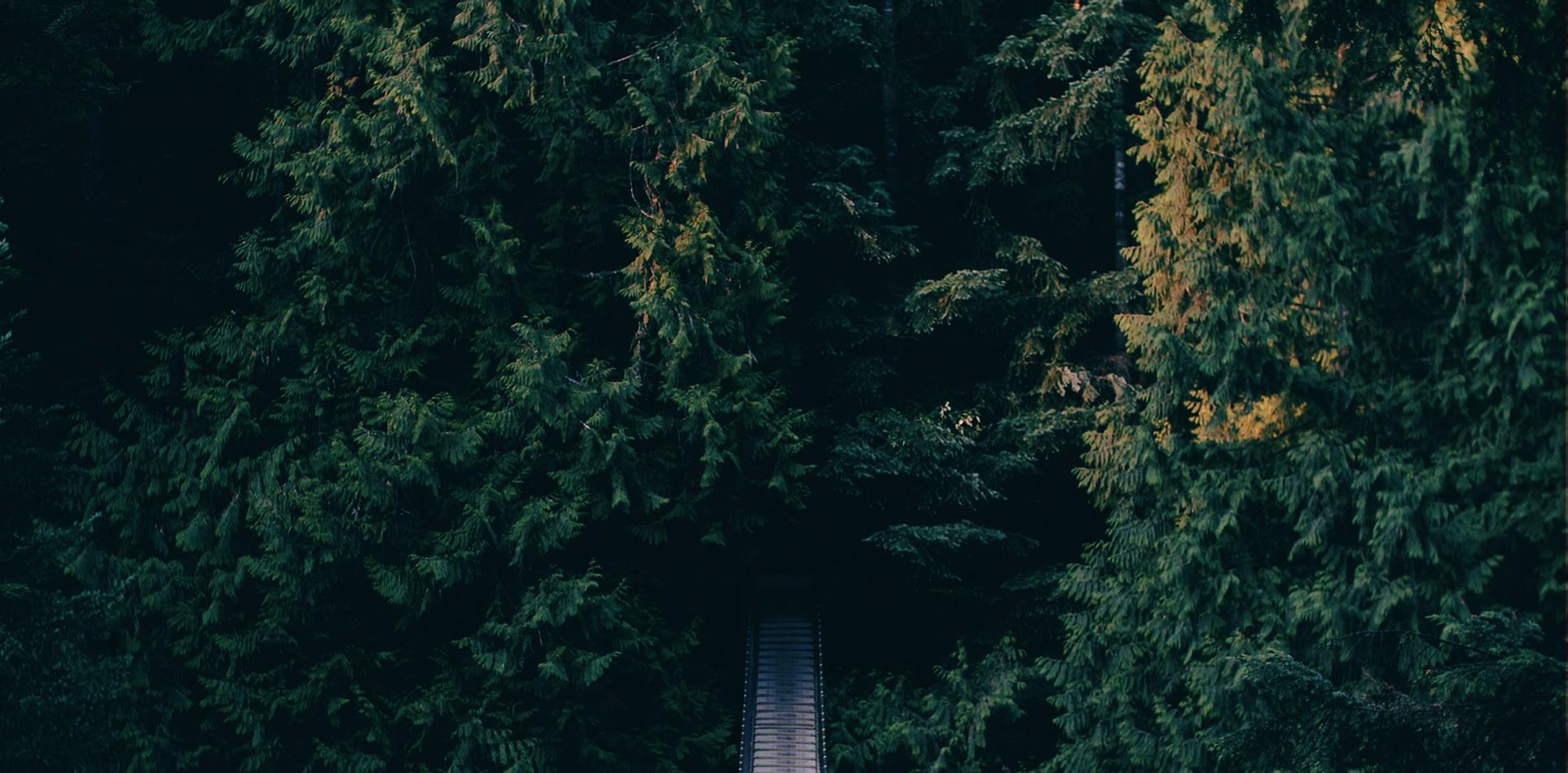 مسیر جنگل