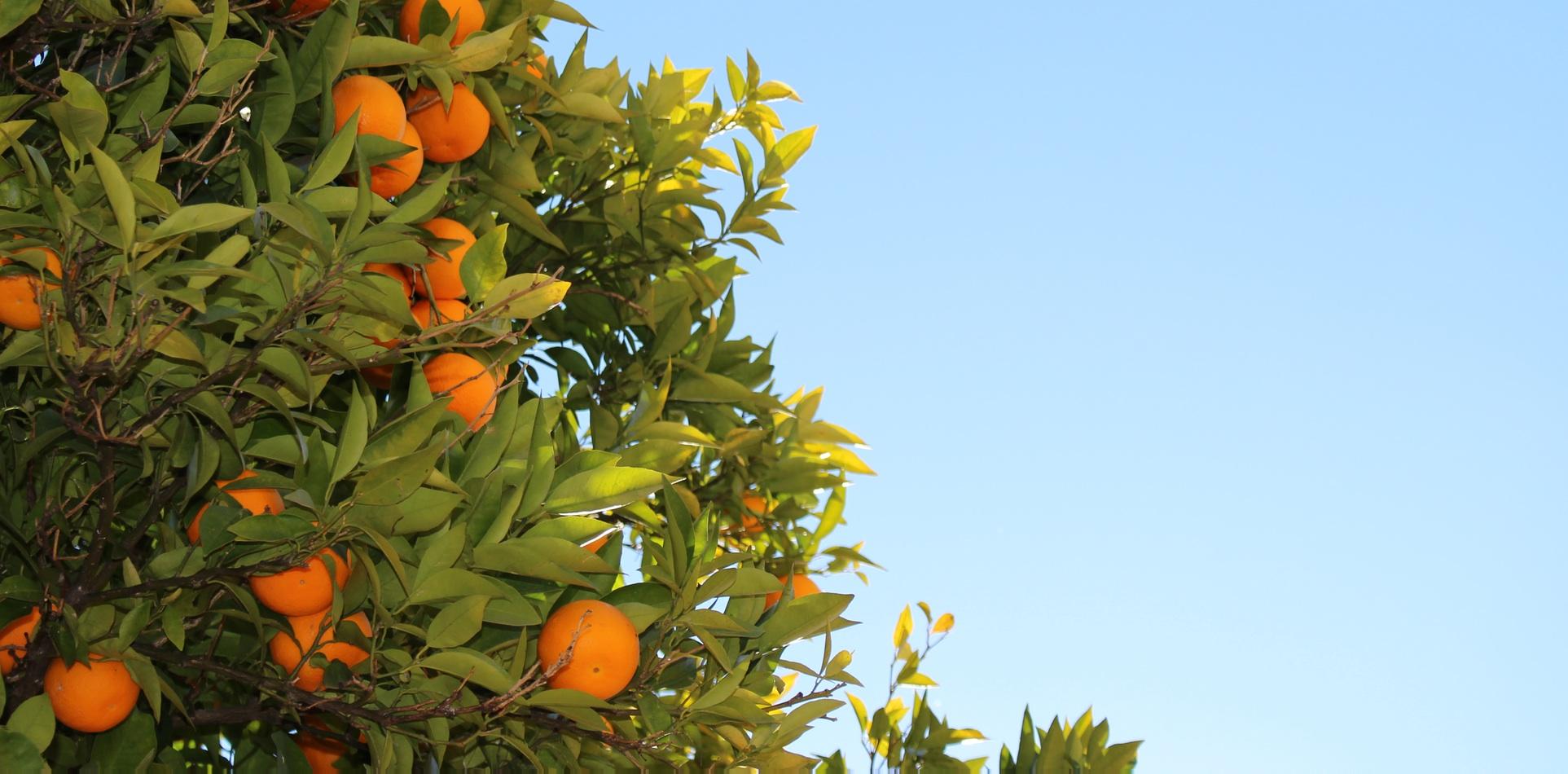 یک دنیا نارنجی